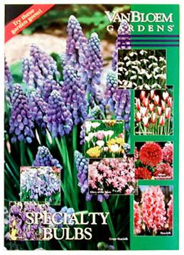 Bulbs Poster